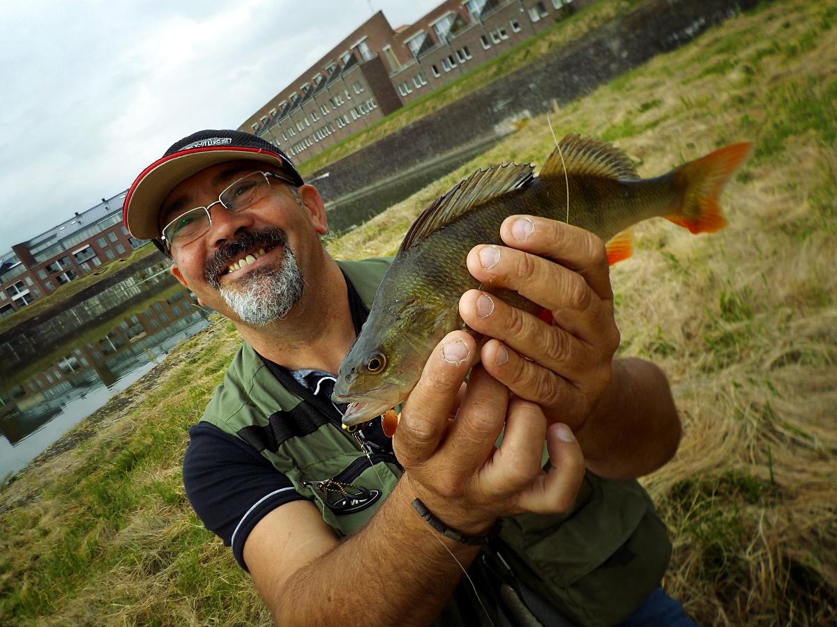 Perche lors d'un voyage de pêche en Hollande