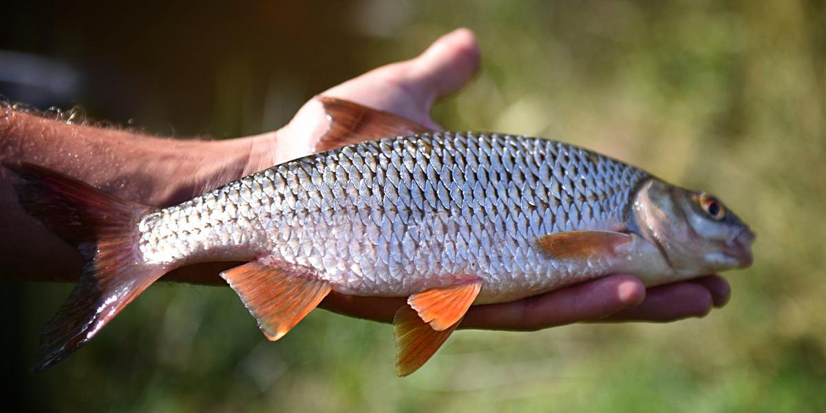 Stage de pêche au feeder en rivière