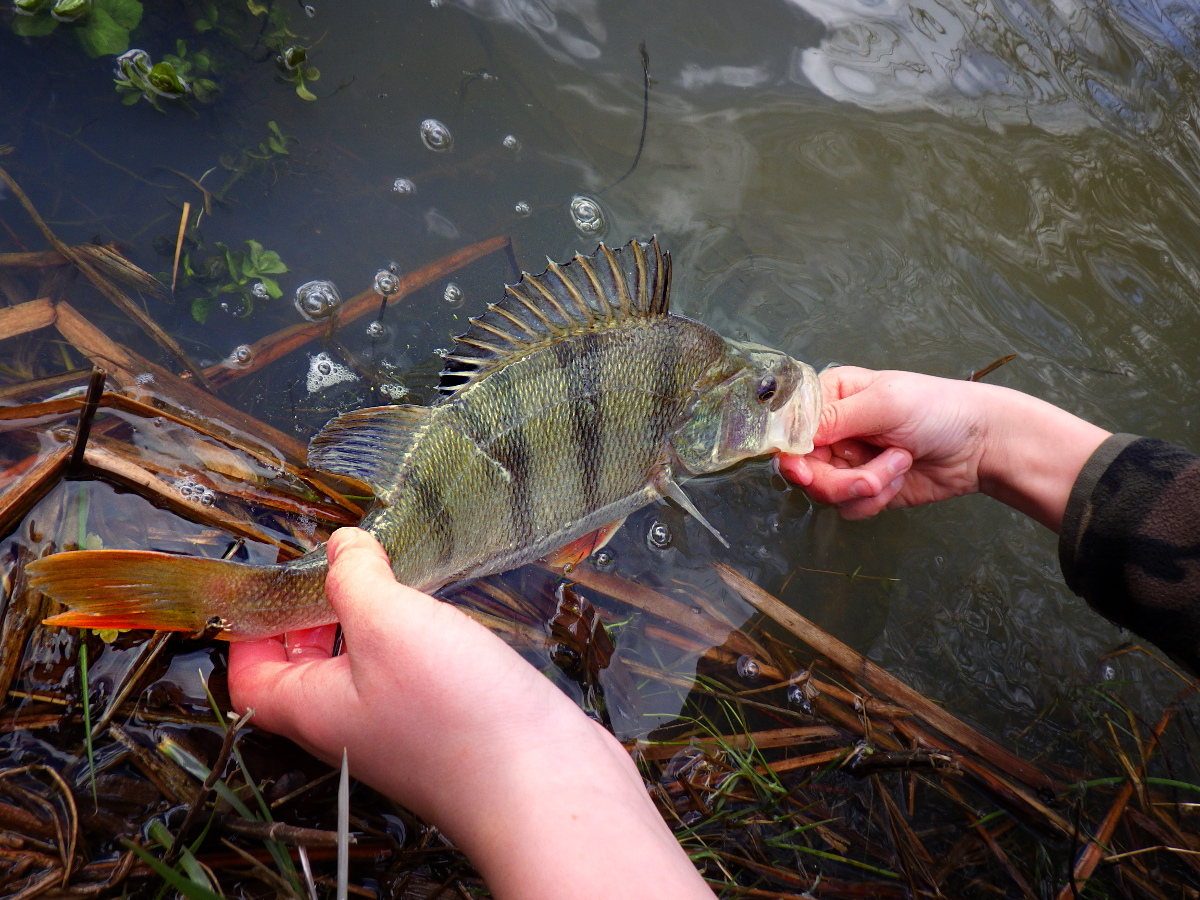 Stage multi-pêche