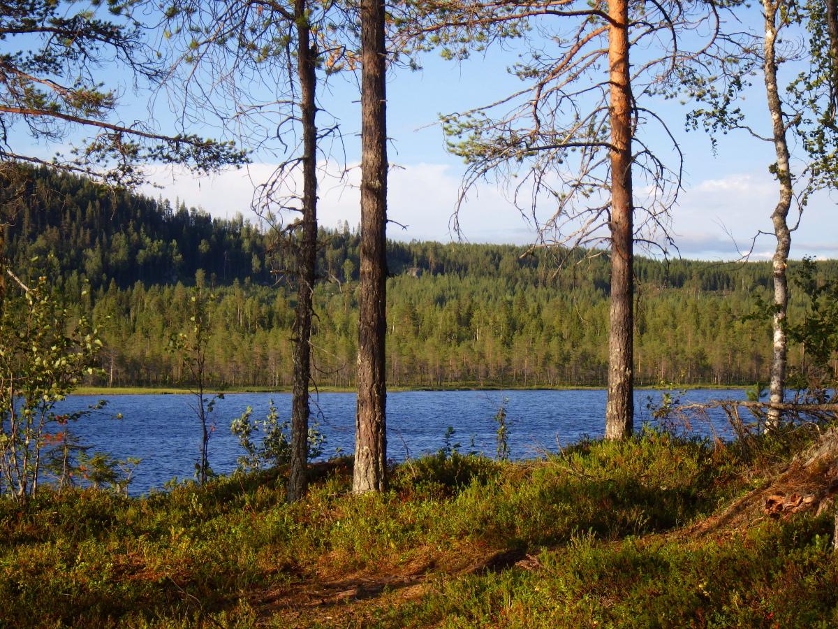 Séjour de pêche en Suède, Laponie