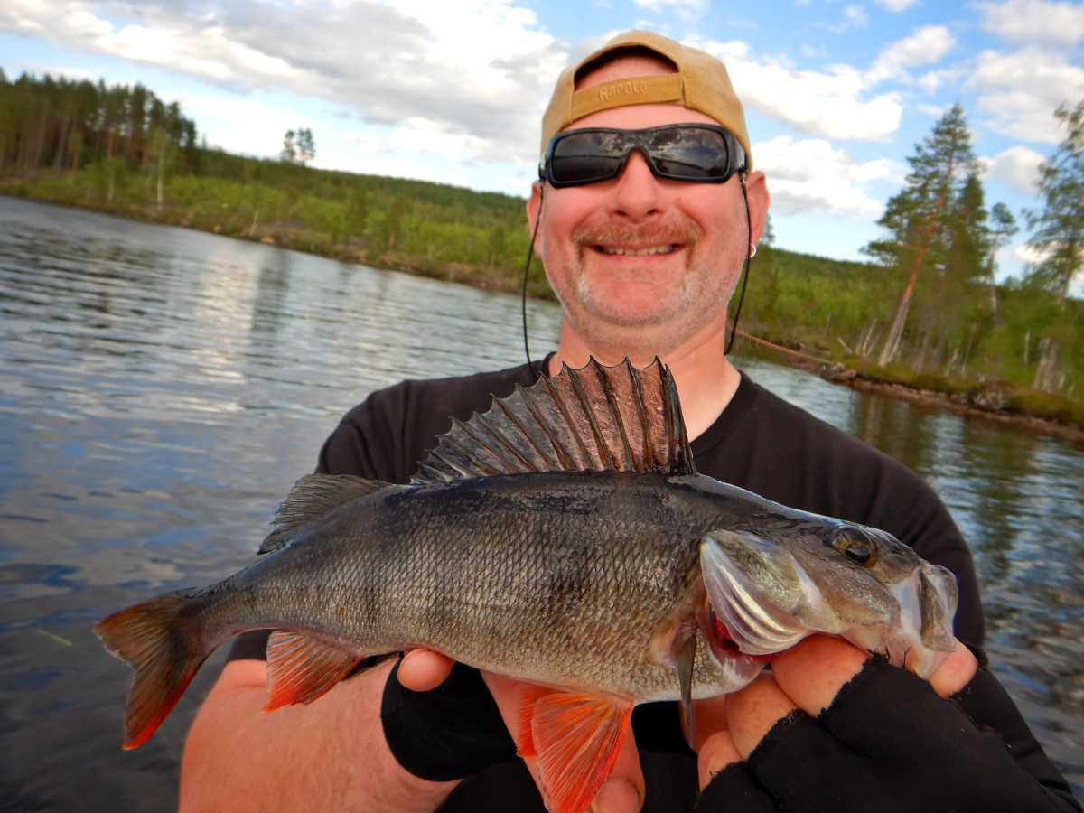 Pêche en Laponie : perche