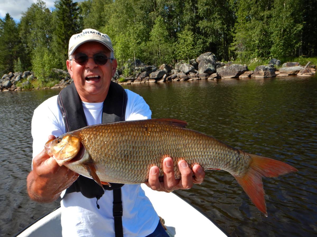 Pêche en Laponie, ide mélanote