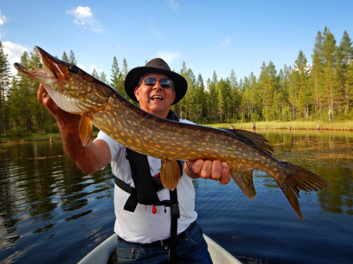 Séjour de pêche en Laponie, pêche en surface