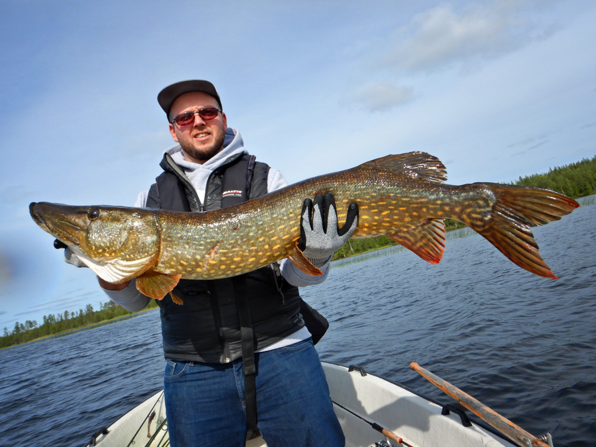 Pêche du brochet en Laponie