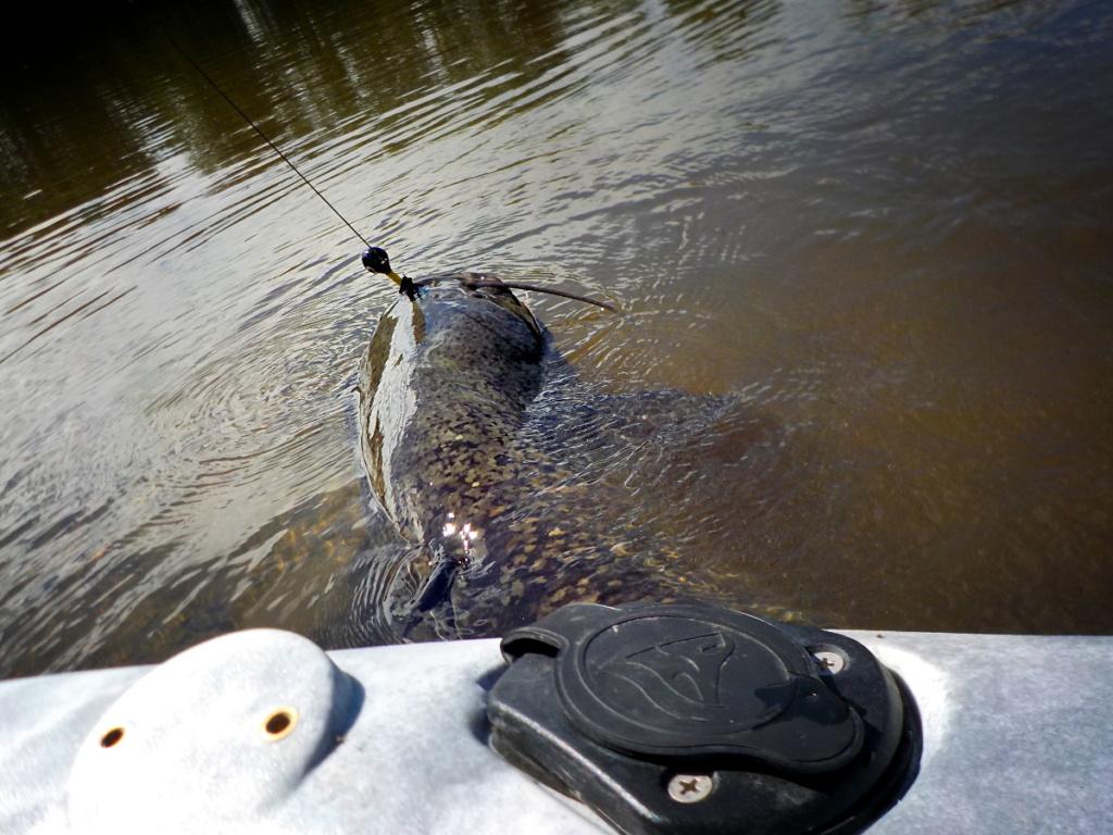 Combat avec un silure en kayak