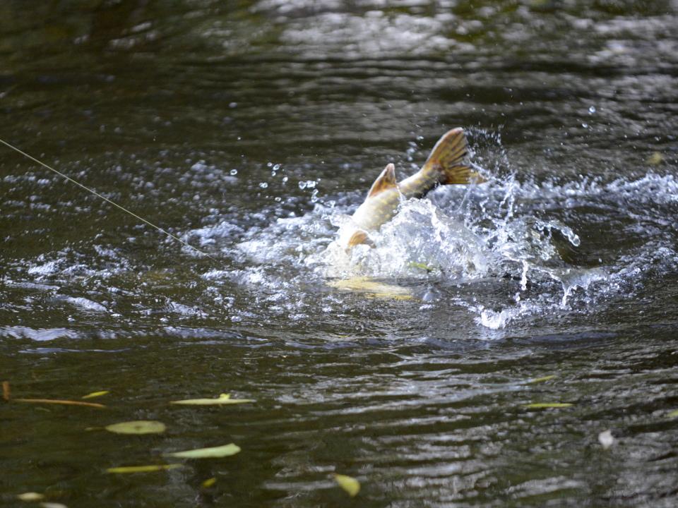 Stage de pêche en Auvergne aux carnassiers